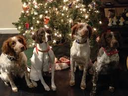 Merry Christmas from the Bird Dog Capital of the World!
